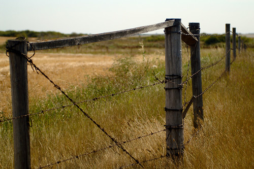 Prairie fence posts