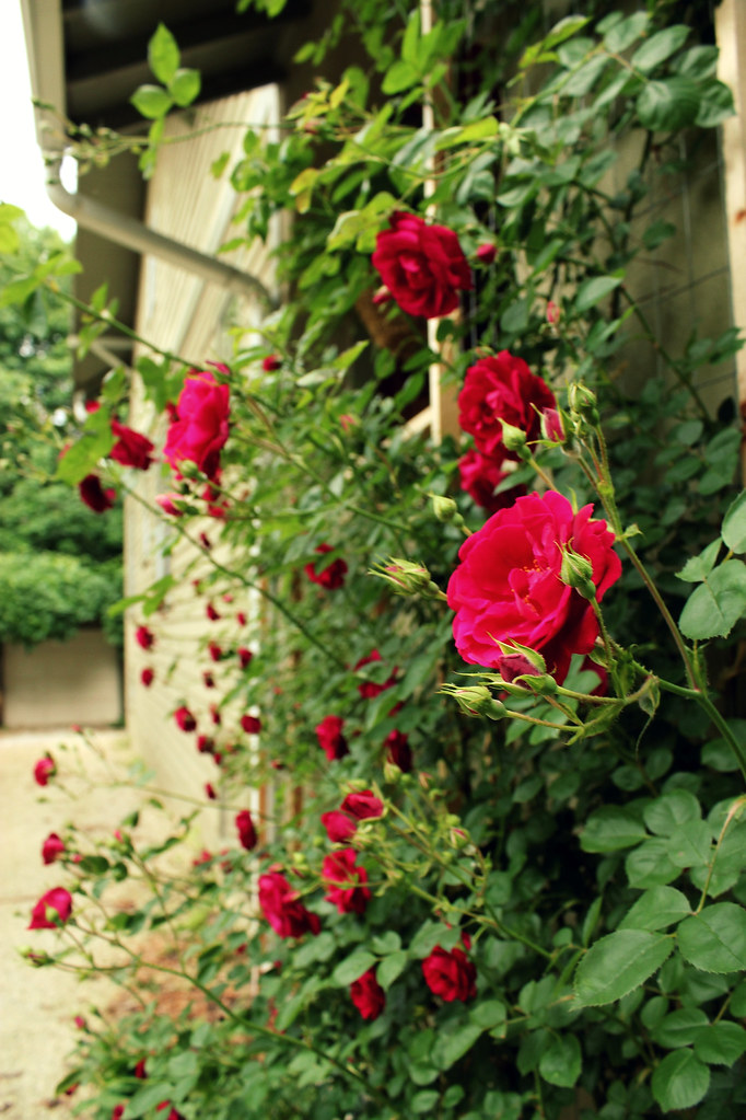 how to make a custom rose trellis