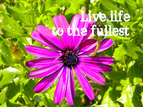 live life print