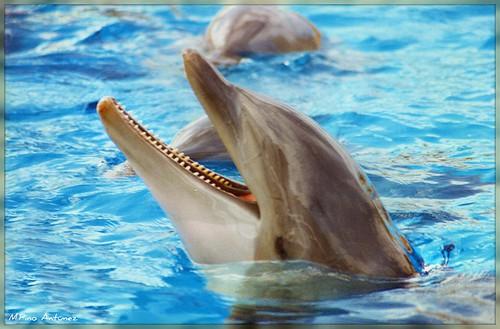 La sonrisa del delfín... by Arice39