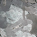Octahedrite (Ainsworth Meteorite)
