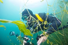 Close Observation (Saldana Daniel) Tags: camera plants lake seascape green water sport tdi switzerland photographer underwater air wideangle scuba adventure oxygen leisure recreation padi leman 16mm discovery drysuit ecotourism hermance projectaware canonef1635mmf28liiusm 1635mmf28lii tecrec