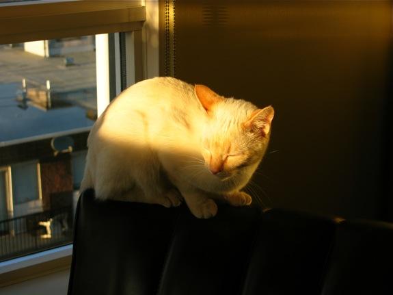 vancouver kitten sunset 006