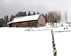Snowed In (ICT_photo) Tags: trees snow pine barn rural fence quebec saintgeorges ictphoto ianthomasguelphontario