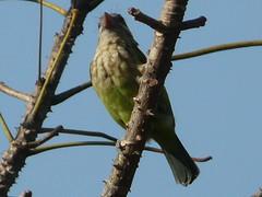 P1150297 (babsybou) Tags: travel india birds silent watching kerala du valley yatra sud inde attapadi birdswatching babsybou malleeshwaramjunglelodge pettickal
