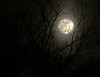 Moonlight in an Icy Sky Through Branches (Bely Medved) Tags: moon night flickr scenic favorites super 5star ©jrj