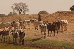 West Africa-4818
