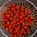 cherry sweetie tomatoes