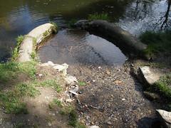 Kilmacurragh Arboretum, Co. Wicklow