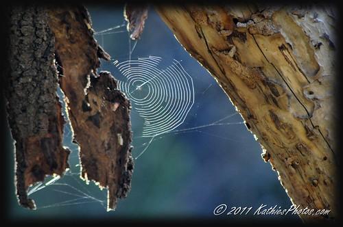 Cobweb in the sunlight