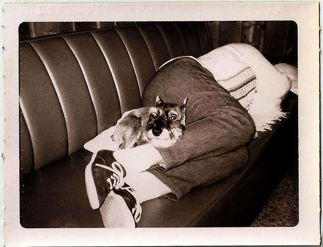 dogsleep2