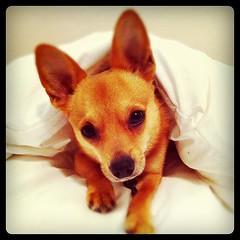... Snug As A Bug In A Rug #dog ...