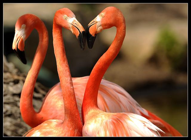 0326_ABLO_Flamingos2