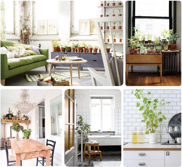 House Plants (4)