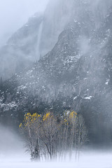 Final Offering (Clay Carey) Tags: winter mist snow storm fog falls yosemite cottonwood clearing