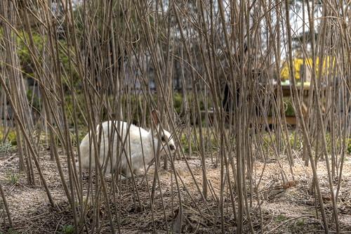 Namsan Bunny HDR