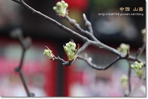 20110411_ChinaShanXi_1441 f
