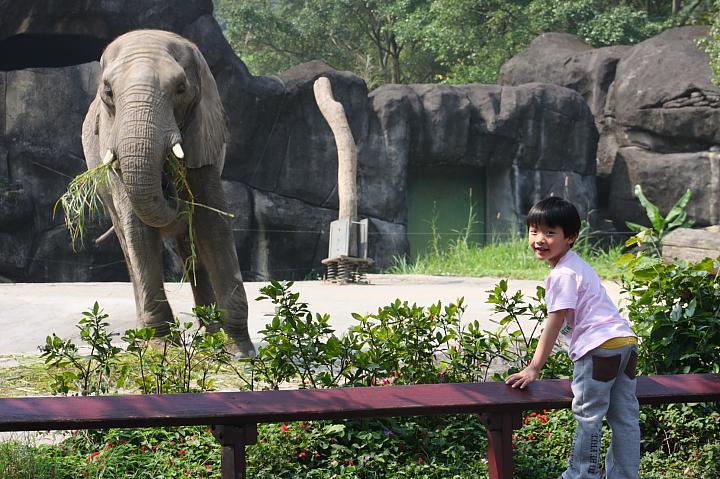 木柵動物園(大象)003