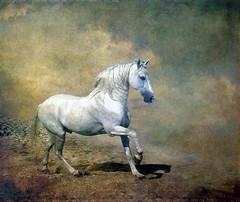 [フリー画像] 動物, 哺乳類, 馬・ウマ, 201104210100