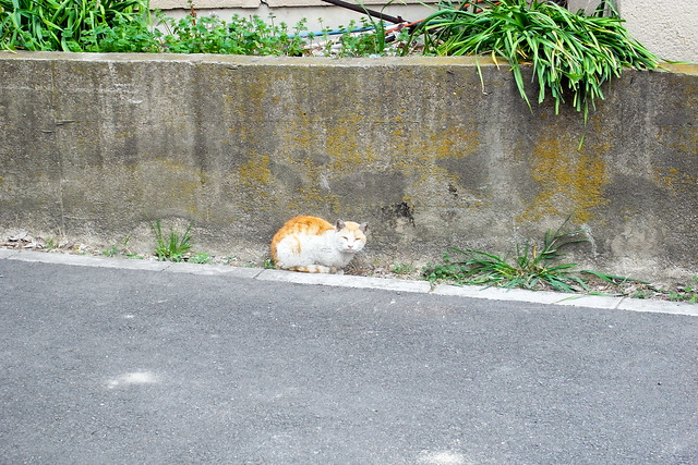 Today's Cat@2011-04-18