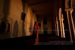 coming back to life...... [Madhu Palli, Sagardari, Jessore, Bangladesh]