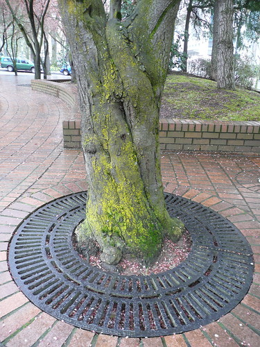 Portland has mossy trees.