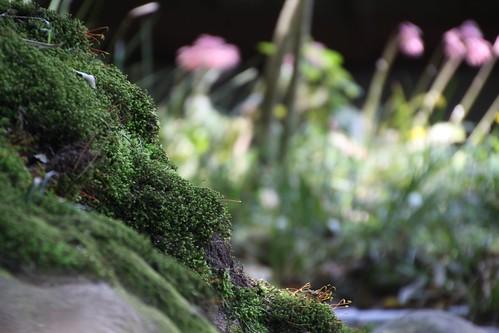 樹の根と花