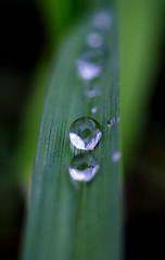 Raindrop (Xanis_WFN) Tags: pentaxkx macrowater pentaxsmcpda35mmf28