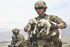 New Mascots (The National Guard) Tags: mountain afghanistan security af insurgents 3rdplatoon 1stbattalion afghannationalarmy laghmanprovince companyd 133rdinfantryregiment taskforceironman azizkhankatsmountainvalley durantatunnel observationposts