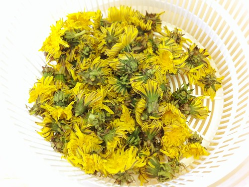Clean dandelions in the salad spinner