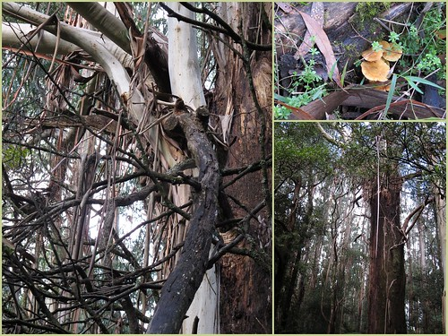 0422Dandenong Ranges national park2