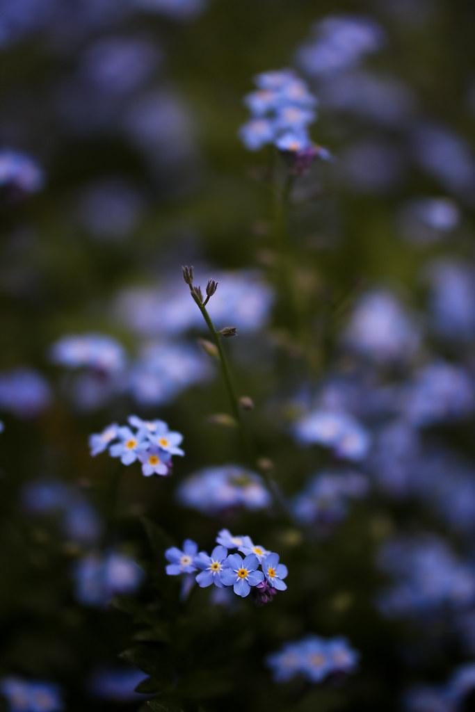 IMAGE: http://farm6.static.flickr.com/5105/5649983637_3ae96f437c_b.jpg