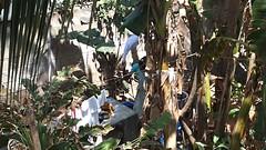 P3021918 (lnewman333) Tags: india laundry tamilnadu southindia mahabalipuram mamallapuram southasia