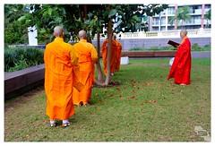 073 (AgaCosmic) Tags: tree festival australia brisbane blessing queensland budda 100daysinbrisbane