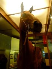 ม้าแข่งประวัติศาสตร์