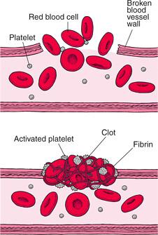 platelets image