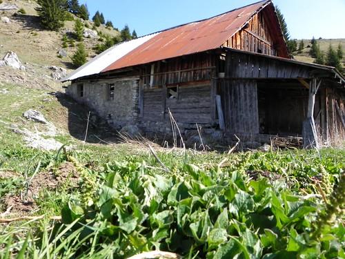 Chalet aux épinard sauvages 017