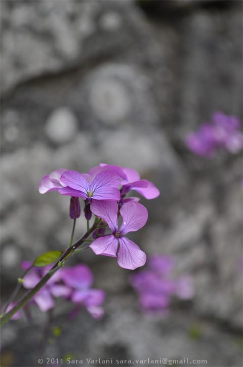 muro in fiore