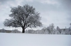 I'd rather have snow than rain. (Sangy23) Tags: winter snow tree ice landscape lee cassandra uwo