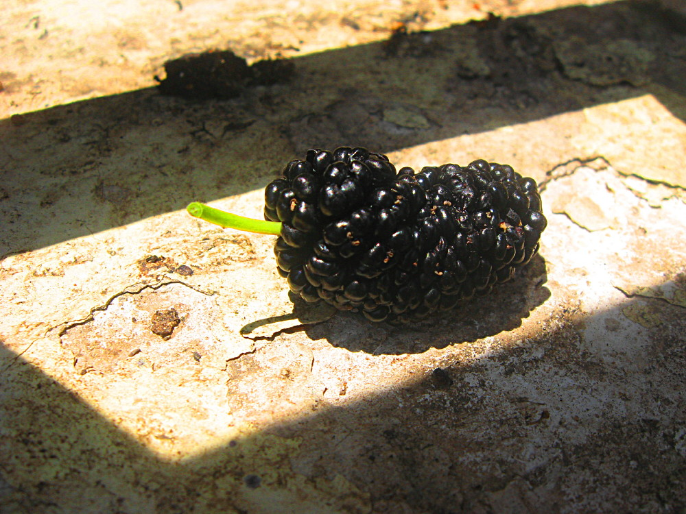 16-05-2011-blackberry2