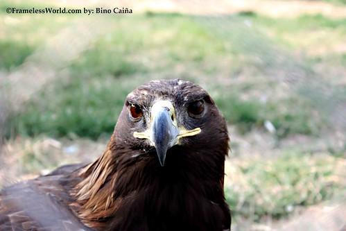 """Eagle"""""""