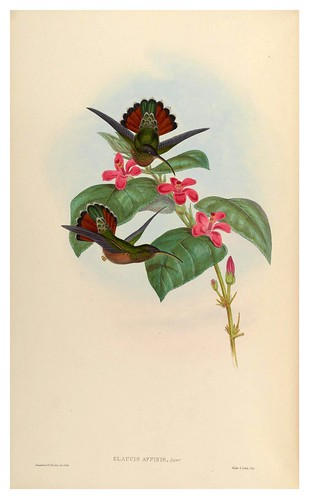 002-An introduction to the Trochilidae  or family of humming-birds Vol 1- 1861-John Gould