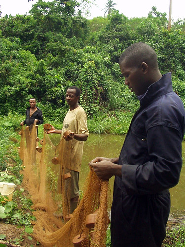Aquaculture, Cameroon. Photo by Randall Brummett, 2002.