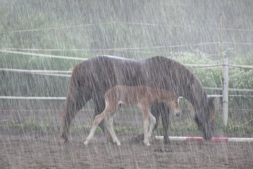 Sateessa