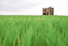 * (doistrakh) Tags: dof sony taiwan digitalcamera fullframe  ricefield hualien a7 ricepaddy voigtlnder  alpha7 milc 118 lensadapterring summicronm50mmf2 leitzwetzlar mirrorlessinterchangeablelenscamera replichrome ilce7