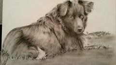 Sketch by Barbara Gould (Iris !!!!!) Tags: dog sketch
