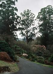 Tall trees (Matthew Paul Argall) Tags: trees tree minolta110zoomslrmarkii 110 110film plant plants vertical footpath garden gardens