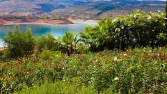 Bine El Ouidane - Between The Lakes (Morrocco) (alitopics) Tags: barrage beni mellal morrocco lac lake water landscape nature flowers mountains
