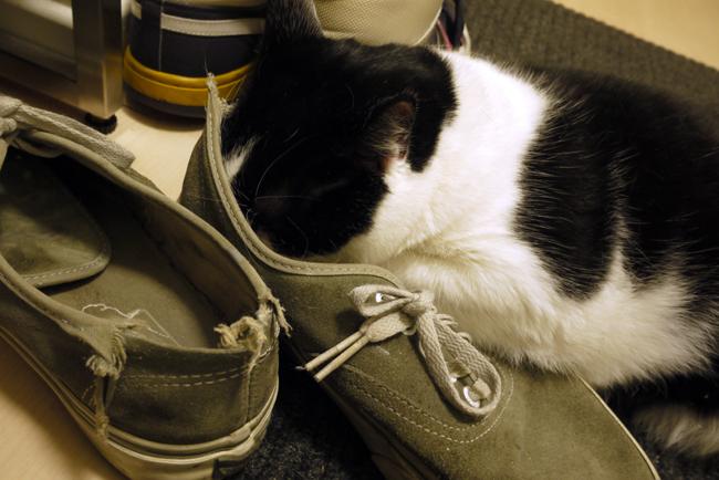 ahhh shoe