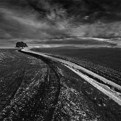 My Way (DavidFrutos) Tags: bw tree monochrome clouds way square landscape monocromo camino paisaje bn murcia nubes árbol canondslr canon1740mm davidfrutos 5dmarkii niksilverefexpro art2011 cagitándemula